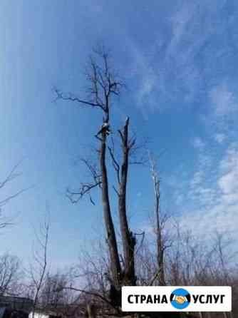 Спил деревьев Караваево