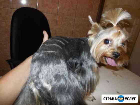 Стрижка кошек и собак, Астрахань Астрахань