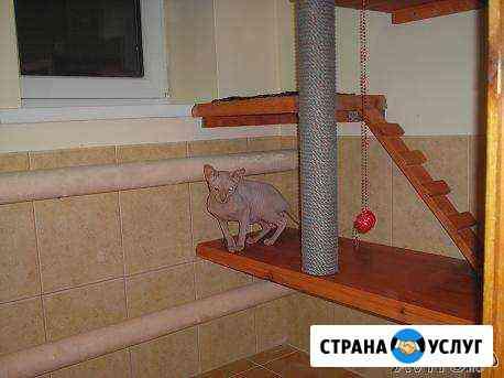 Передержка домашних животных, Астрахань Астрахань
