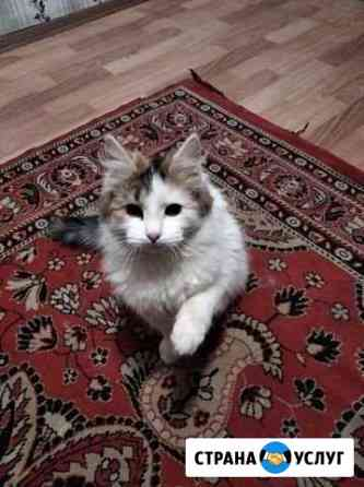 Возьму на передержку кошечку или котика Саранск