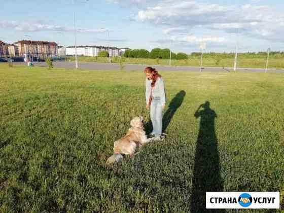 Уход за животными/передержка собак и кошек и прочи Великий Новгород