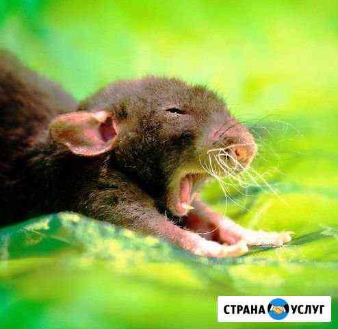 Уничтожение тараканов, клопов и мышей Архангельск