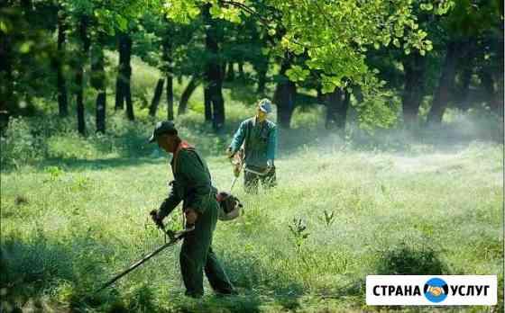 Покос травы.бурьяны,камыш.Вывоз Элиста