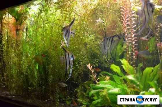 Обслуживание аквариумов Мещовск