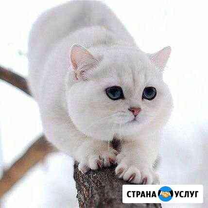 Передержка кошек Ульяновск