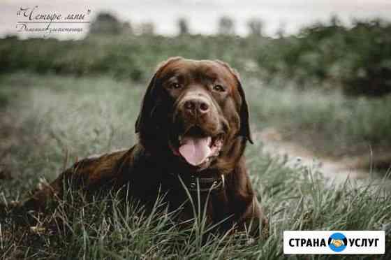 Домашняя зоогстиница Курск