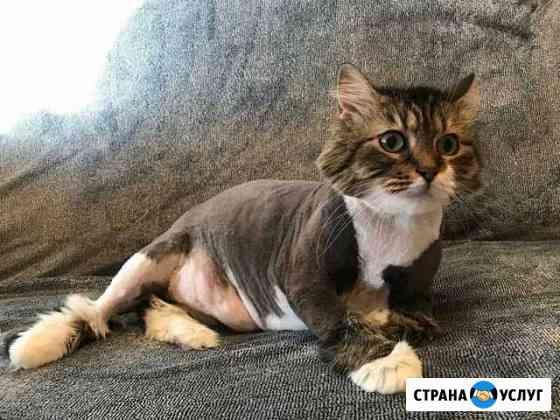 Кошечки в красивой и удобной стрижке Калининград