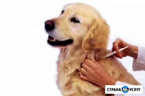 Вакцинация животных на дому Калининград