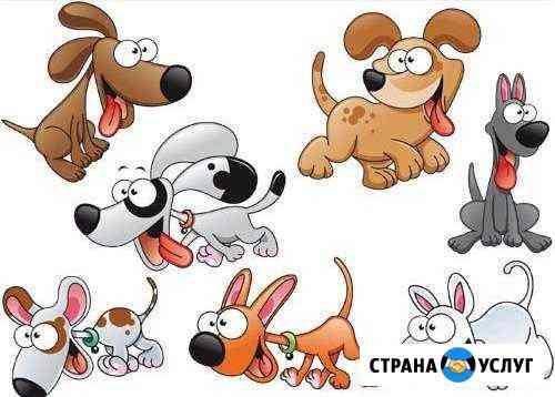 Зоогостиница в Ульяновске. Передержка собак Ульяновск