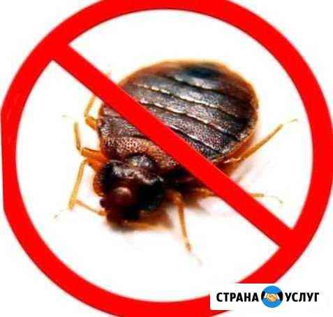 Дезинсекция насекомых, дезинфекция грибка плесени Владивосток