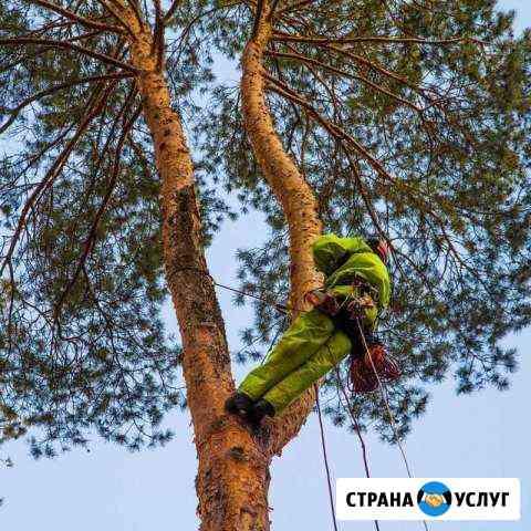 Спил, удаление сложных деревьев. Обрезка кустов Петрозаводск