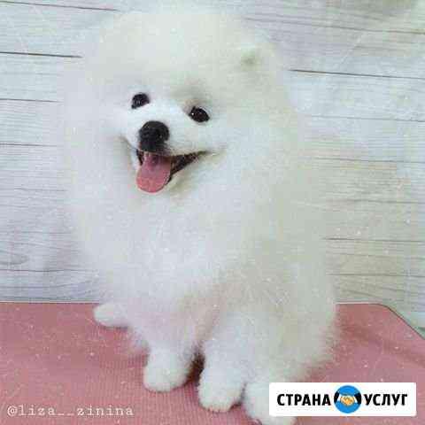 Стрижка собак и кошек Белгород