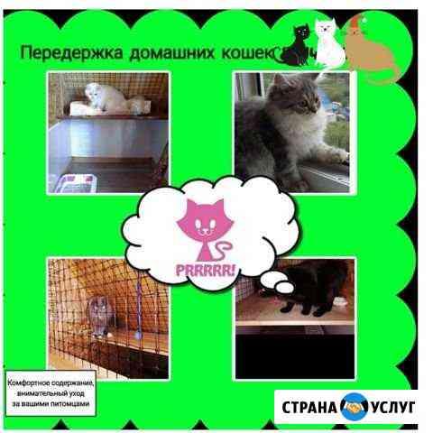 Зоогостинница для домашних кошек Петропавловск-Камчатский