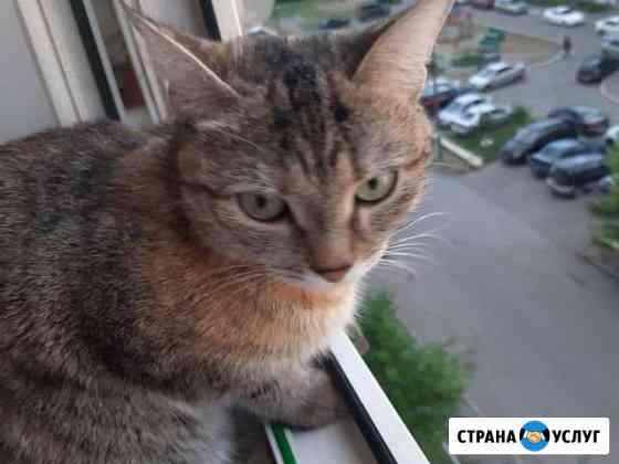 Кошка хочет котят Курган