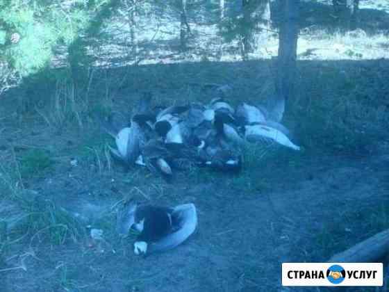Осенняя охота на гуся Архангельск