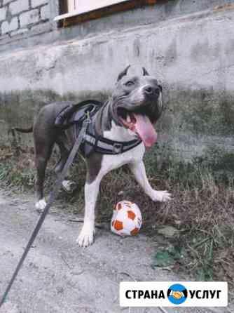 Домашняя передержка собак Кандалакша