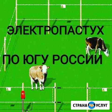Электропастух Элиста