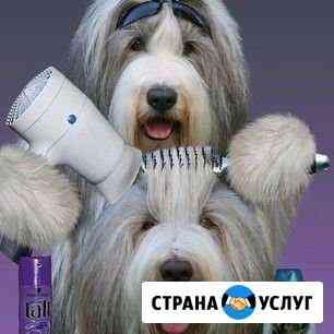 Стрижка кошек, собак и даже кроликов) Чита