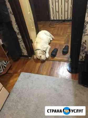 Ищем случку для пса Белгород