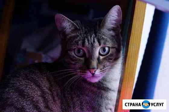 Фотограф домашних животных Тверь
