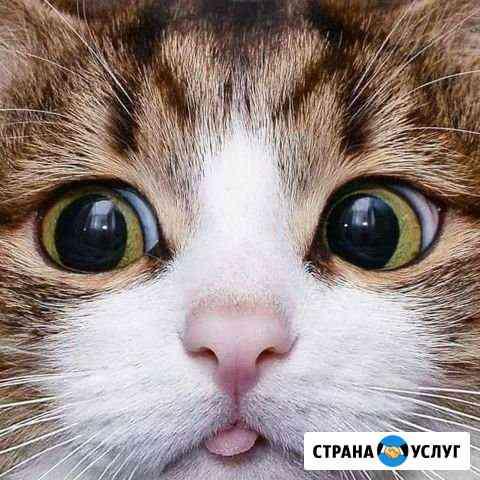 Ухаживаю за котами и кошечками Тамбов