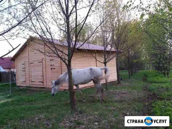 Постой для лошади оздоравливающий Красное-на-Волге