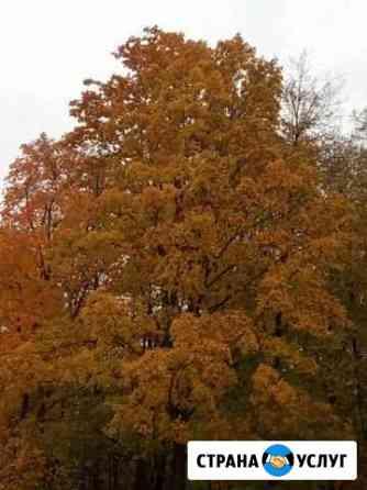 Спиливание деревьев Ливны