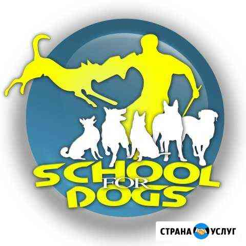 Дрессировка собак Омск