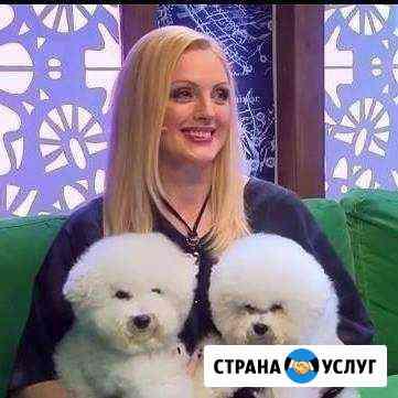 Стрижка собак и кошек Орёл