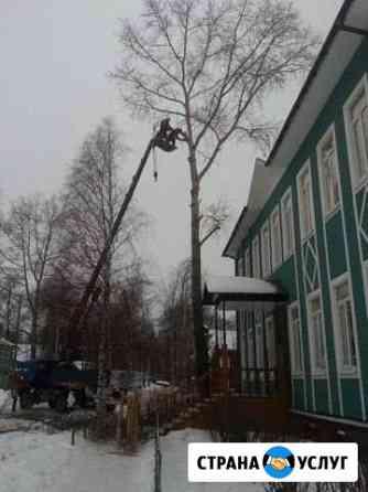 Спил деревьев Котлас
