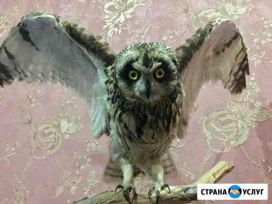 Продам и изготовлю чучела животных Архангельск