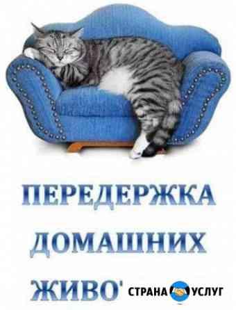Передержка кошек Благовещенск
