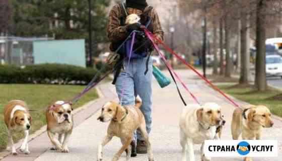 Выгул собак зоогостиница Вологда