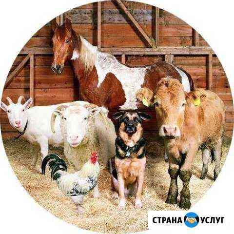 Передержка сельхоз животных Кострома