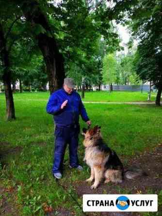 Дрессировка собак Смоленск
