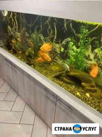 Обслуживание аквариумов Воткинск