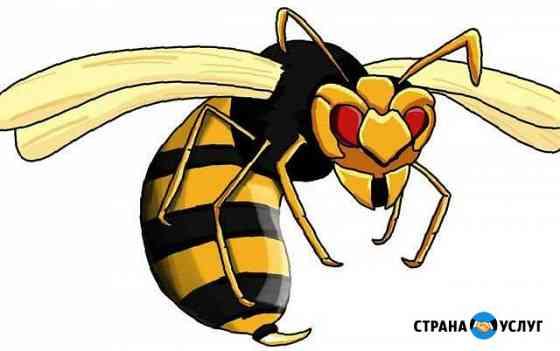 Уничтожение клещей, землероек, ос, осиного гнезда Архангельск
