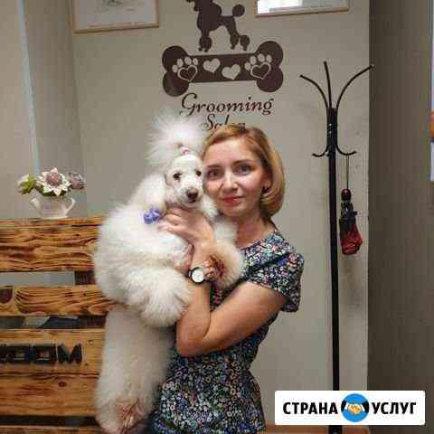 Стрижка собак и кошек в Черногорске Черногорск