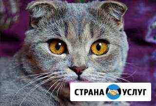Передержка для ваших питомцев Барнаул