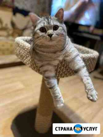 Кот на вязку Салехард