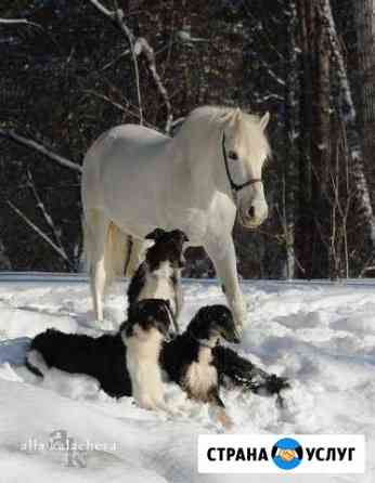 Фотопрогулка с белой лошадью и русской борзой Томск