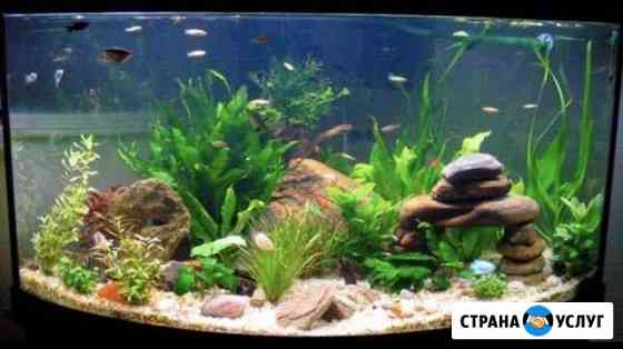 Обслуживание аквариумов Мурманск