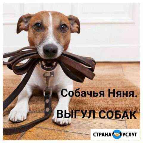 Собачья няня (Выгул/Уход/Сопровождение к врачу) Муром