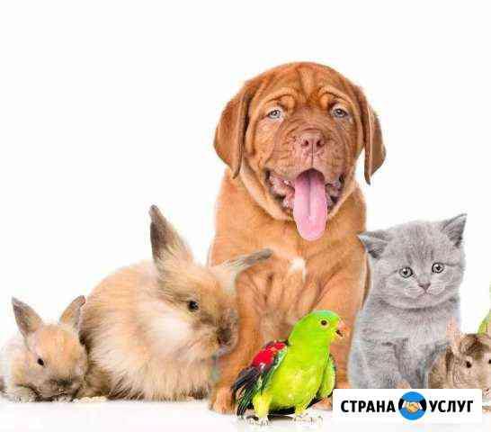 Гостиница для животных.передержка Брянск