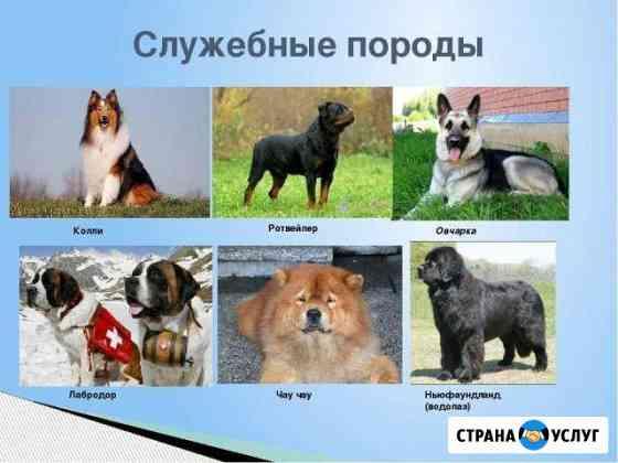 Дрессировка собак Алексеевка Белгородской области