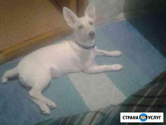 Отдам собаку Воткинск