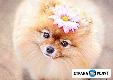 Стрижка собак и кошек Владимир