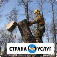 Спил Деревьев любой сложности Петрозаводск