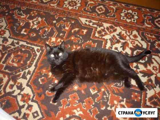 Передержка кошек и других мелких животных Ярославль