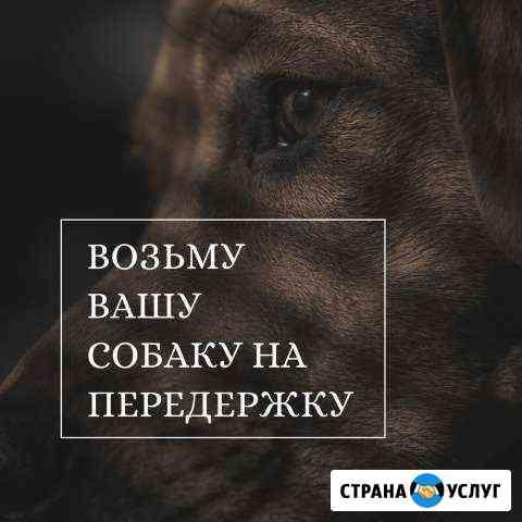 Передержка собак Тамбов